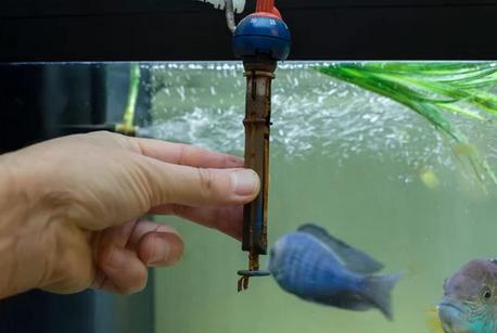 Aquarium Heaters